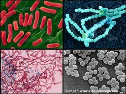 Gambar Cara Menyembuhkan Penyakit Sipilis Dengan Cepat